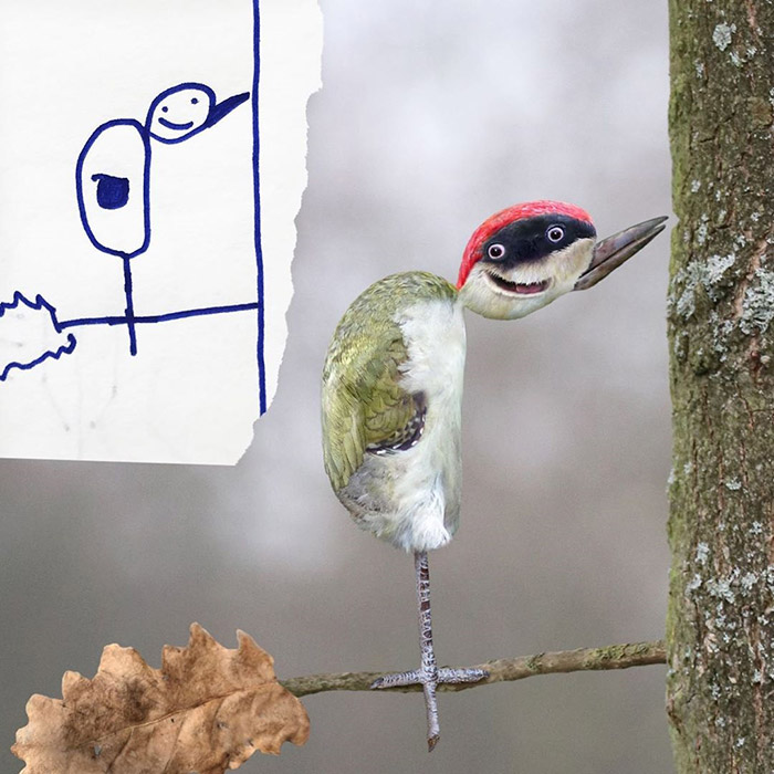odd bird with two mouths Photoshop