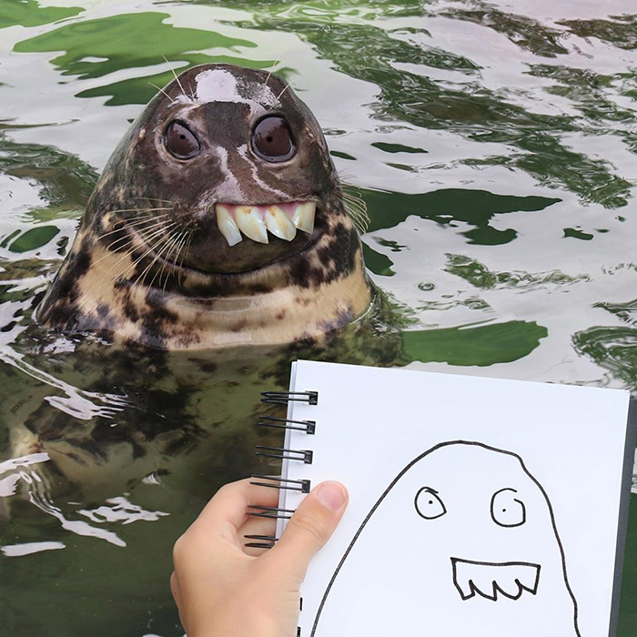 scary seal Photoshop